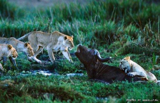 Конфликты в природе