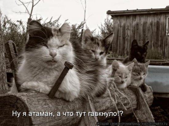 Котоматрицы-11