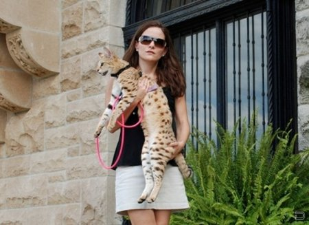 Гигантская кошка