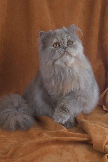 Семейство кошачьих (ч 1)