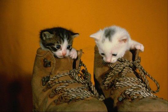 Семейство кошачьих (ч. 2)
