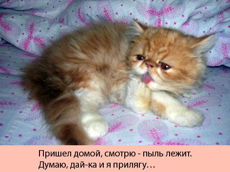 Много хорошего котэ