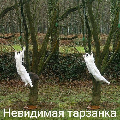 Котэ и невидимое