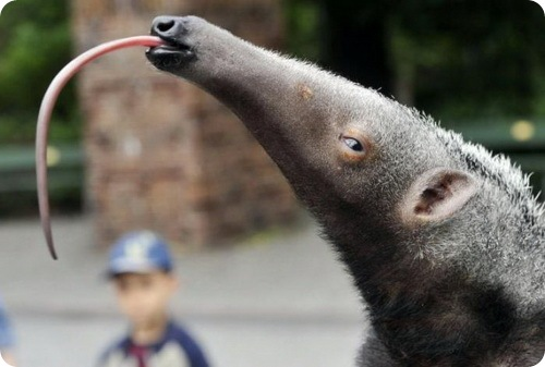 Странные и редкие животные