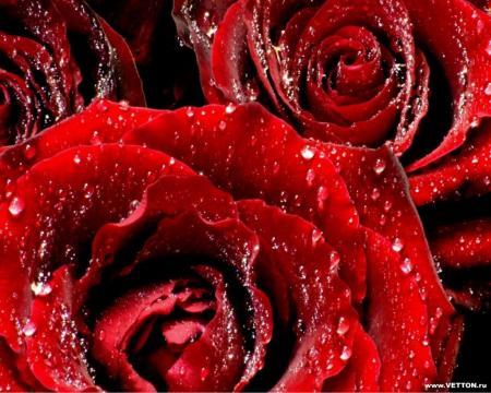 Цветок любви помогает похудеть