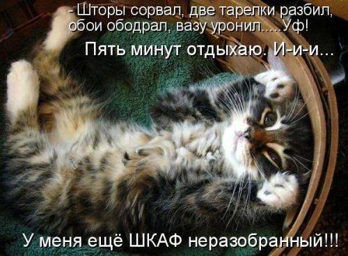 КотЭ-позитив