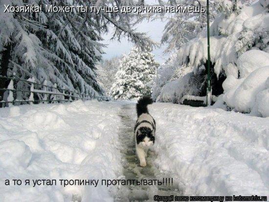 Котоматрицы-12
