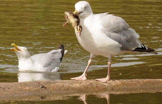 Фото 2009 года: удивительные кадры с участием животных