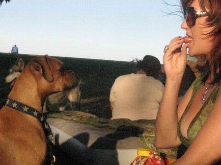 Горячие девушки и горячие собаки