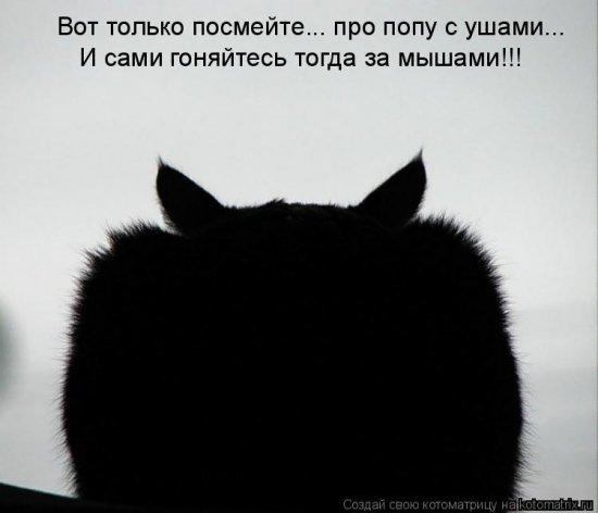 Котоматрицы-13