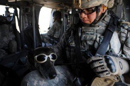 Псы войны