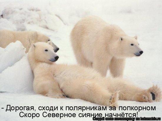 Котоматрицы-14