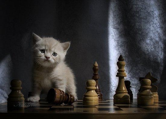 Фотограф Наталья Кузнецова