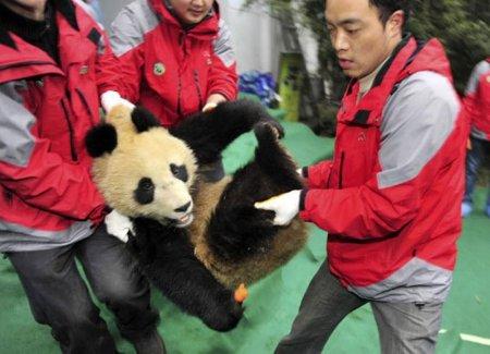 Переезд панд