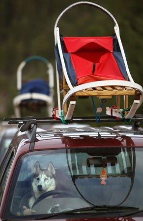 Собачье ралли на горнолыжном курорте в Шотландии