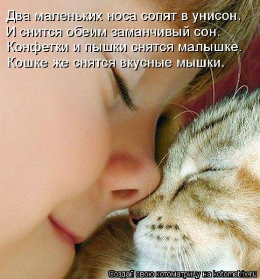 Котоматрицы-15