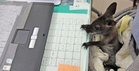 Животные за работой