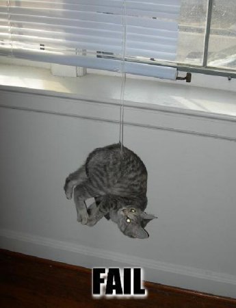 Кошачьи провалы