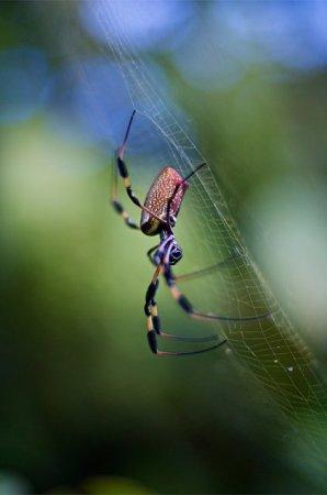 Великолепное портфолио.. Фотограф Andrey Sergunin (112 фото)