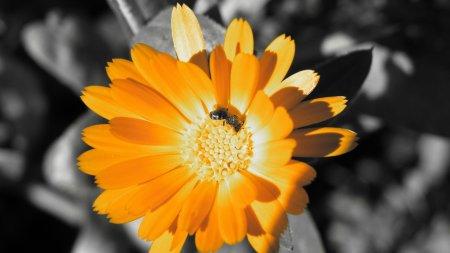 Красивые фото FullHD №36