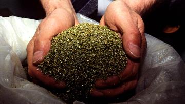 Мозырские таможенники изъяли полтора килограмма конопли типа марихуана в поезде Киев - Брест