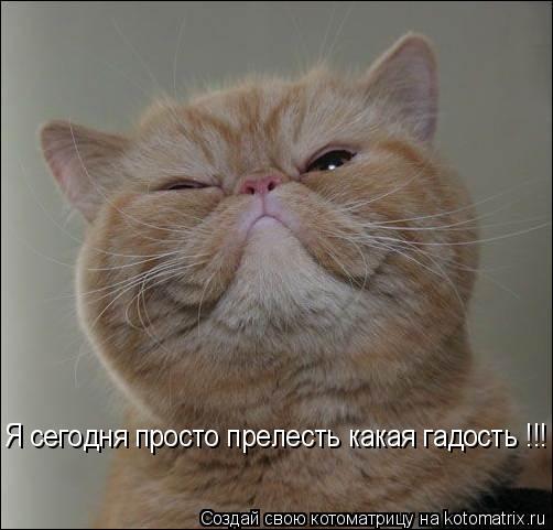 Котоматрицы-17