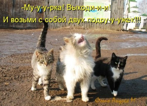 Только котЭ !