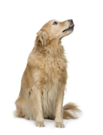 Собаки и их хозяева