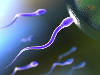 Курение марихуаны приводит к фальстарту сперматозоидов