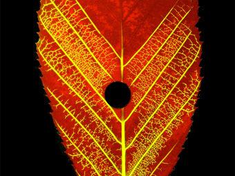 Физики объяснили различия у листьев и деревьев