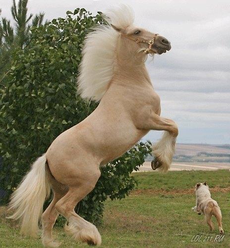 Вот такие вот лошадки