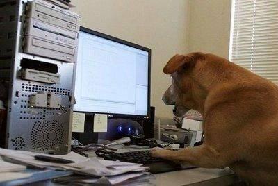 Животные работают