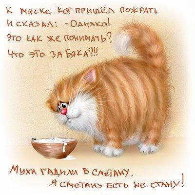 Смешные (грустные) котики