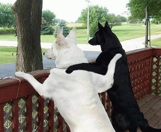 Забавные животинки