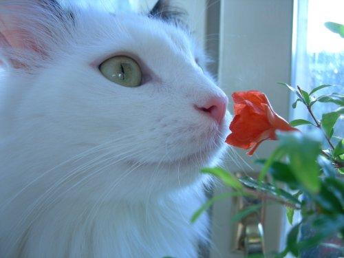 Котэ и цветы