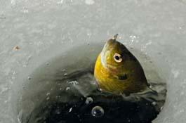За ловлю собственной рыбы светлогорский фермер получил огромный штраф