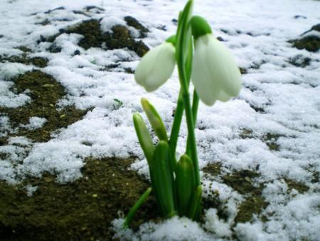 Последняя неделя зимы будет влажной и не очень холодной