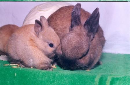 Милые крольчата