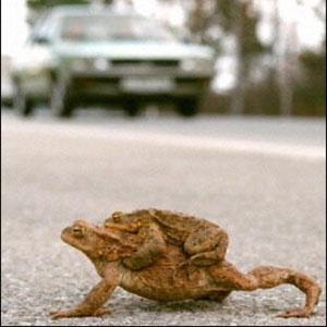 Дорогу лягушкам!