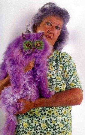 Хозяйка сделала из кота фиолетового филина!?