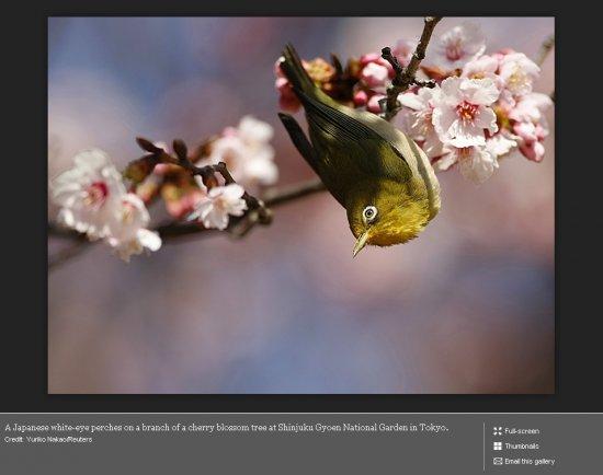 Лучшие фотографии природы - 2009 (Boston.com)