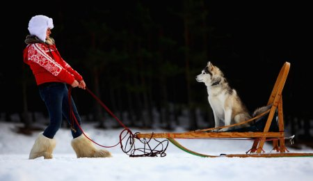Собачки и упряжки
