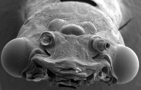 Страшные лица под микроскопом