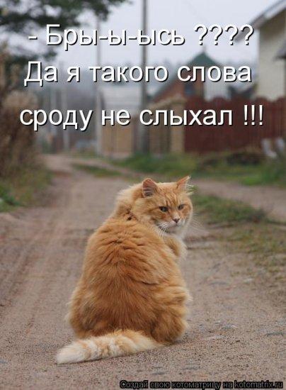 Котоматрицы-18