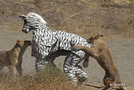 Придурки против львов