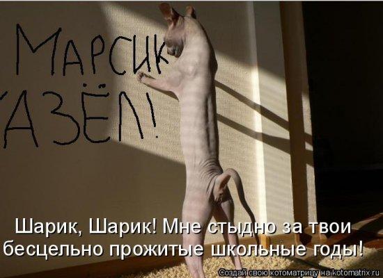 Котоматрицы-19