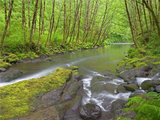 Природа и её обитатели