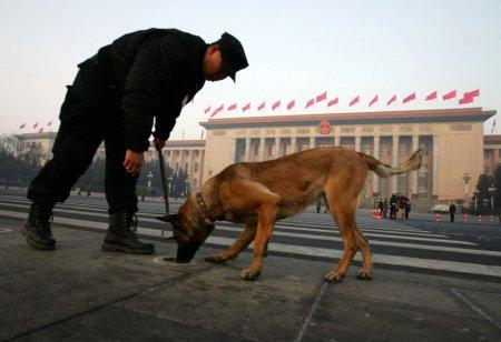 Как живется собаке в Китае