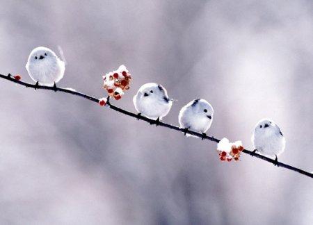 Звери и птицы