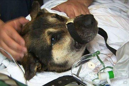 Спасение собаки из бурных вод